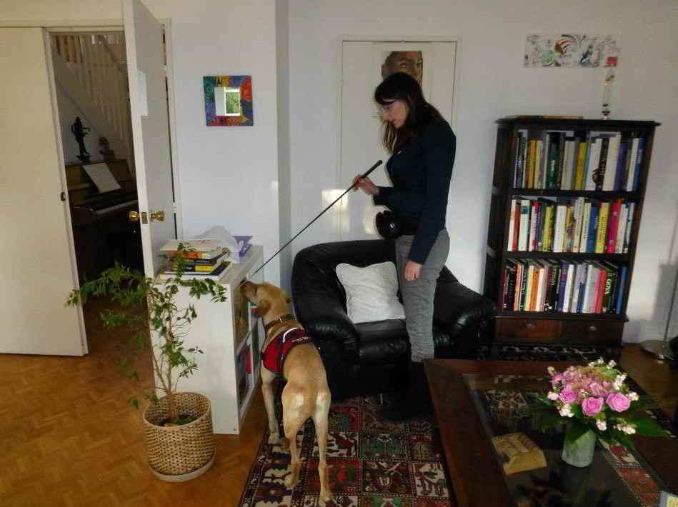 chien detecteur punaises de lit